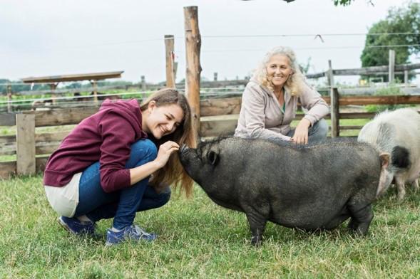 Eva Hieret mit Hängebauchschwein
