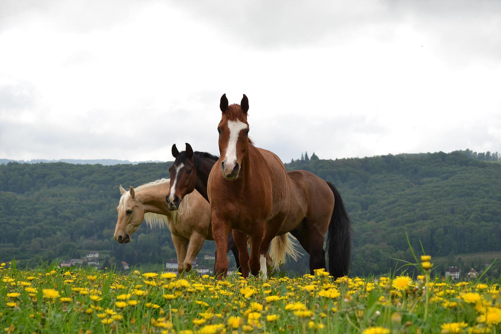 Pferdeherde 3er Hof