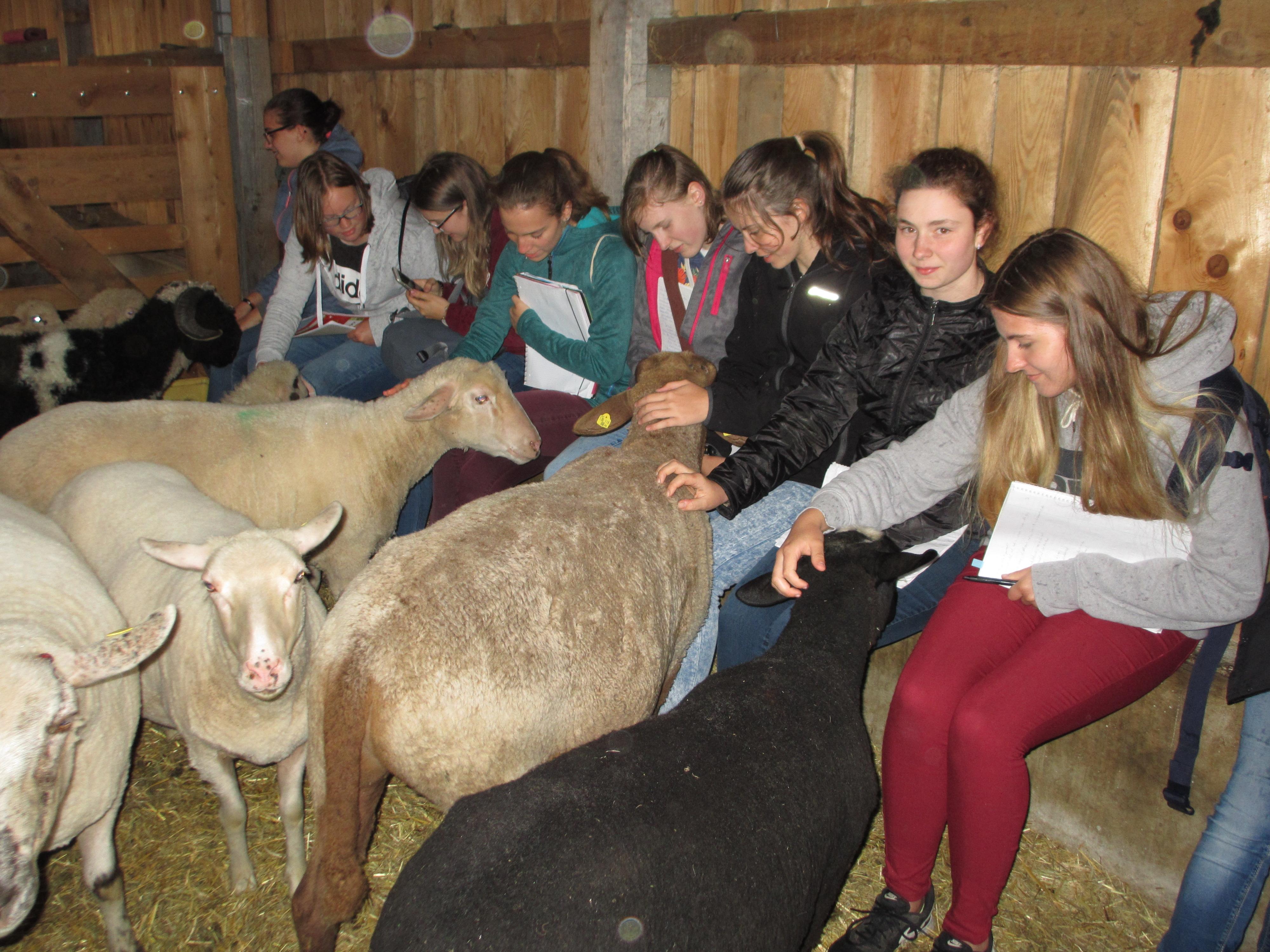 Kinder im Schafstall