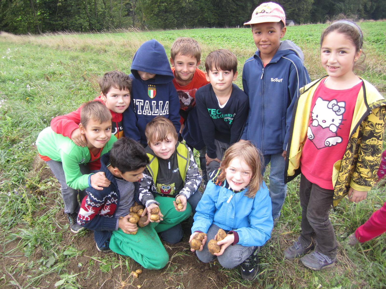 Schule am Bauernhof Erdäpfel sammeln
