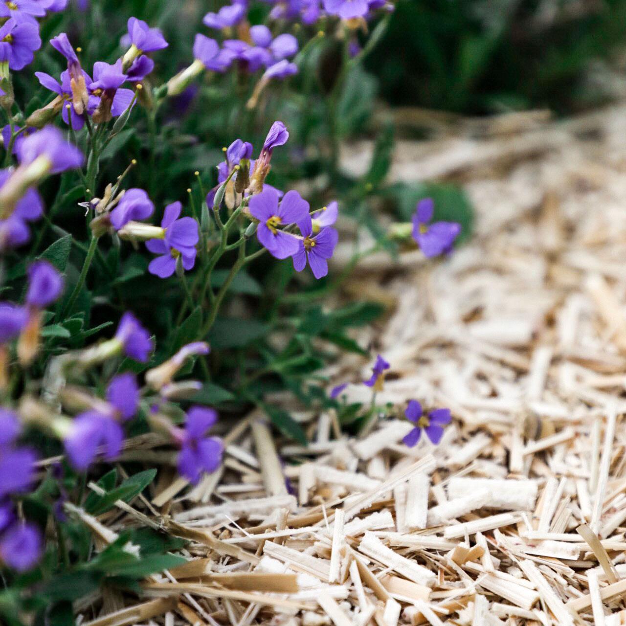 Kompost und Erde Kompostarten Mulch
