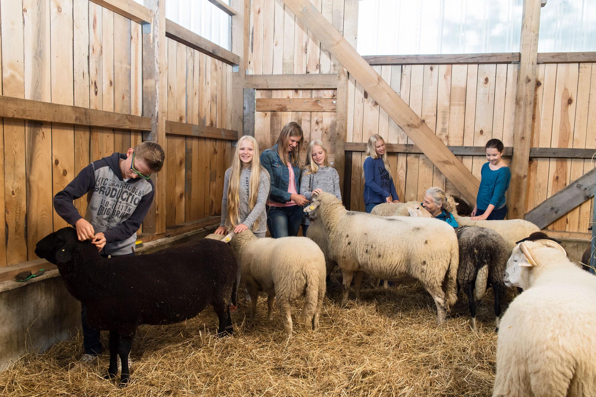 Schule am Bauernhof Schafe mit Kindern