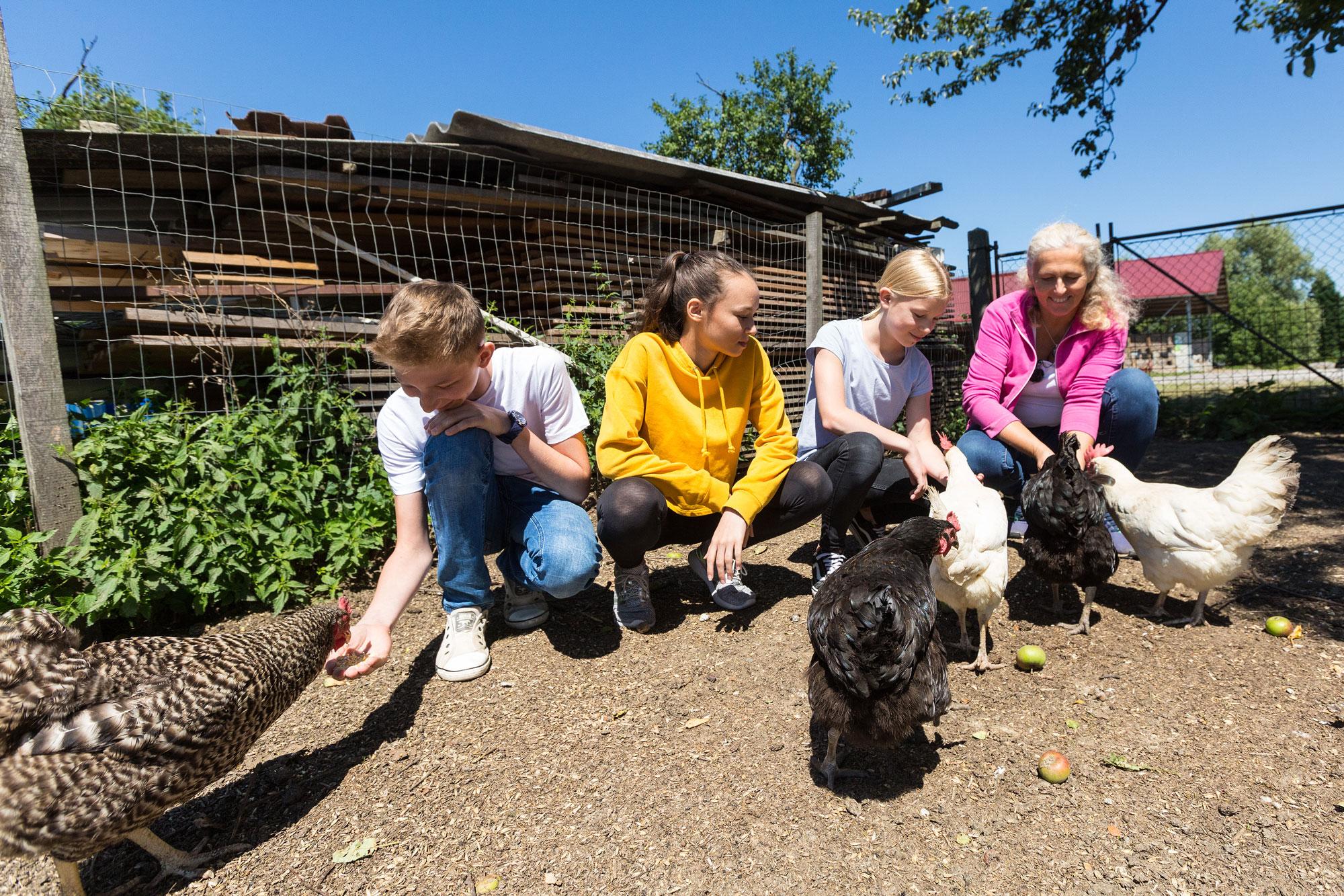 Schule am Bauernhof Hühner füttern