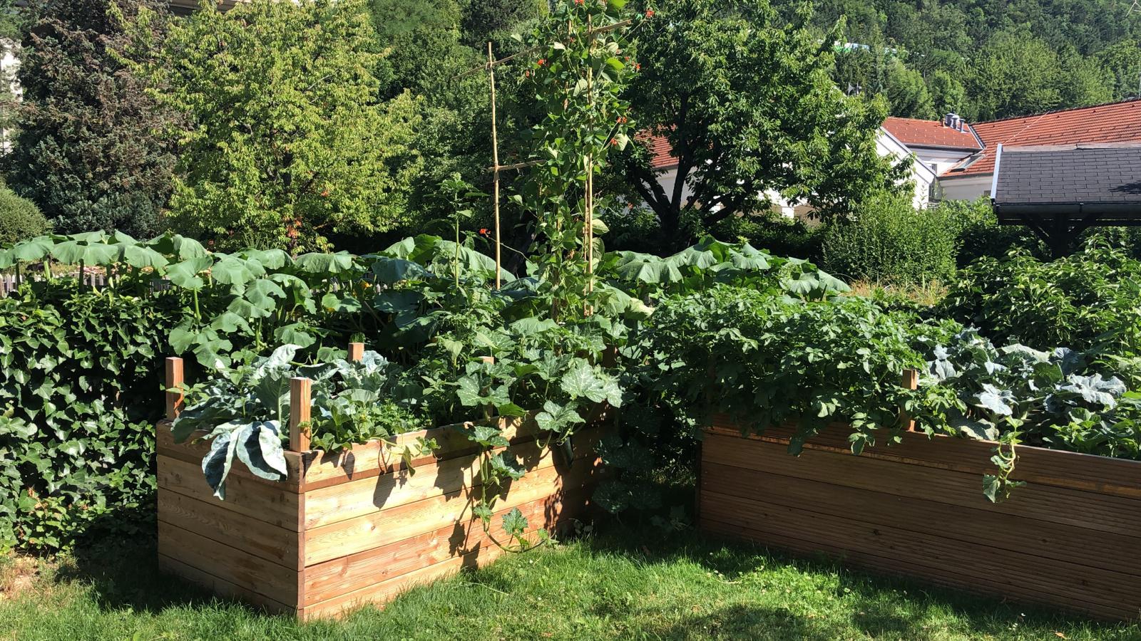 Kompost und Erde Hochbeet