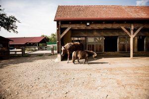 Offenstall mit Pferden